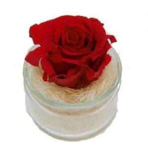 roses qui durent